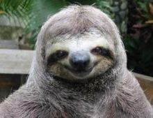 smiling-sloth1