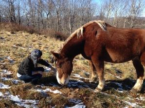 We found some really beautiful, sweet horses on our hike!