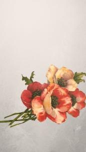 iphone6 wallpaper flowers